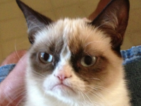 grumpy-cat-still-hates-everyone-at-south-by-southwest